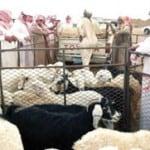 Sheep, soccer and Relationships (Aotearoa)